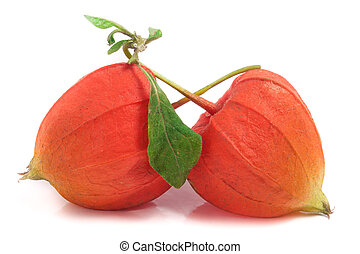 two closed physalis or husk tomatoes with leaf isolated on...