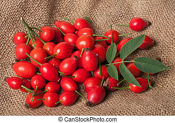 Fresh rosehip berries with green leaf on sacking