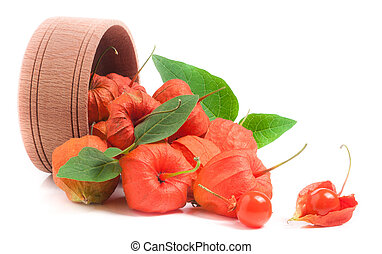 husk tomatoes with leaves in wooden bowl isolated on white...