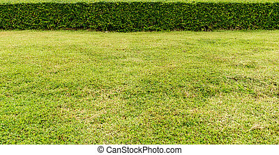 Green grass and trimmed plants - Green grass with trimmed...