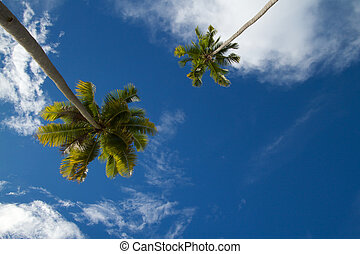 Two coconut palm tress against blue tropical sky