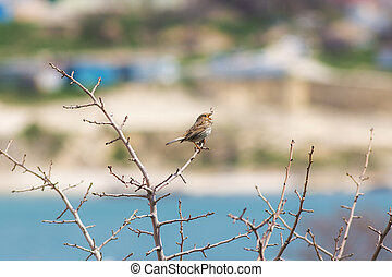 Small songbird on a branch