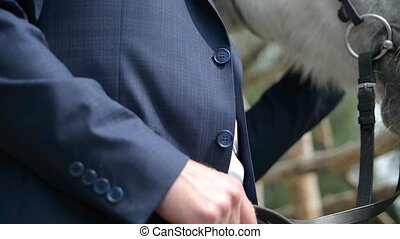 groom holding a white horse by the bridle, outdoor, close-up...
