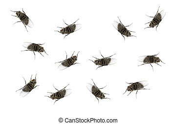 Many dead flies isolated on white