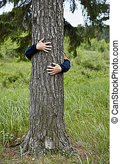 Man hugging tree - A man hugging a big tree in the forest