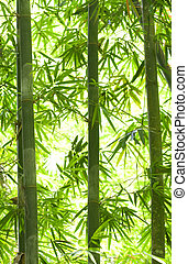 bamboo forest with a lot of backlights