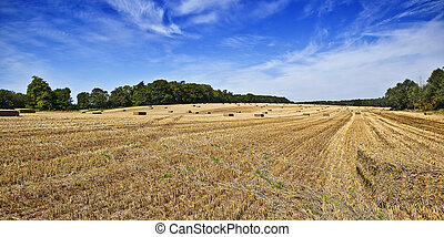 Harvest landscape view