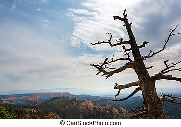 Dry tree on the top of mountain