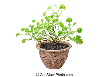 Flowerpot, isolate on a white background
