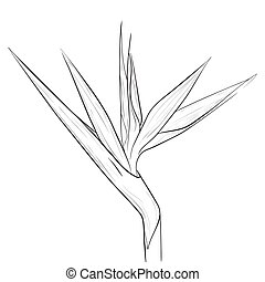 Bird of Paradise flower in sketch style