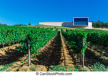 Rows of vines in the field in Spain