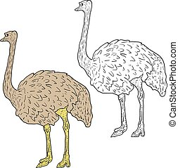 Sketch big ostrich standing on a white background. Vector...