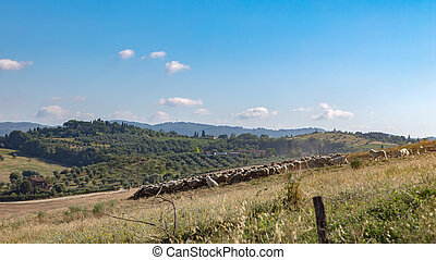 Toscana - Beautiful Tuscan rural scenery atmosphere. Italia.