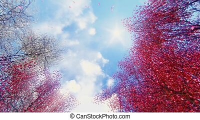 Blooming sakura falling petals and sunny sky - Look up at...