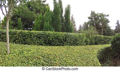 Decorative shrubs in park - RUSSIA, GURZUF, OCTOBER: Camera...