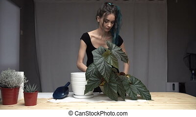 Beautiful cute girl with dyed blue hair carefully transplant the plants in pots in room. begonia