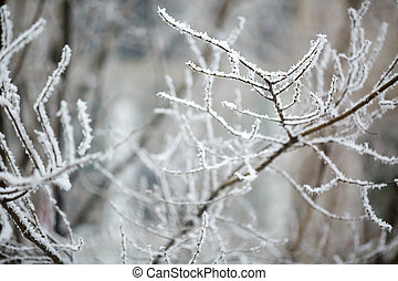 Winter branches of trees in hoarfrost on background snow