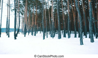 Forest in cold winter - Forest in winter with a lot of...