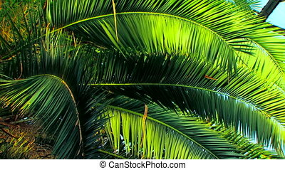 Palm in the jungle