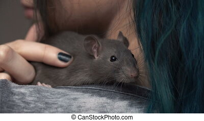 Home little pet brown rat is sitting on the girl's shoulder....