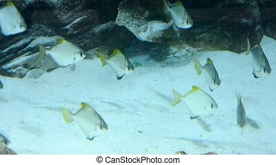 Many fish in the big aquarium in Ocean Plaza mall. - Many...