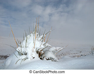 Snow landscape - A grass tuft covered with snow against a...