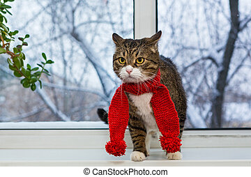 Gray domestic cat in a red scarf sits on the windowsill and...