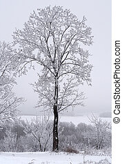 Frozen tree at the top of mountain