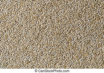 Grain of quinoa. Healthy vegan food. - Grain of quinoa....