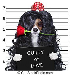 crazy in love valentines dog mugshot - valentines crazy and...