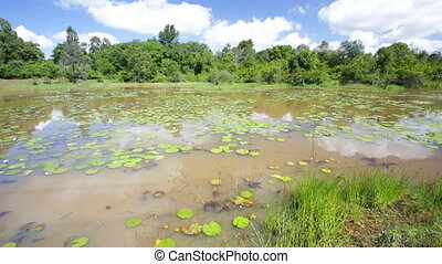 Water Lilies in Karura Forest Lake, Nairobi, Kenya - Water...