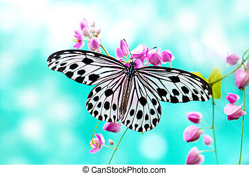 Rice Paper Butterfly - Close up Rice Paper Butterfly on pink...