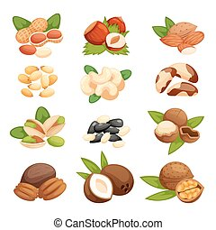 Set of nuts vector illustration. Vegetarian nutrition...