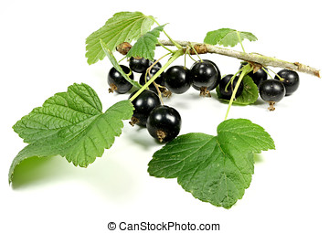 blackcurrants isolated on white background