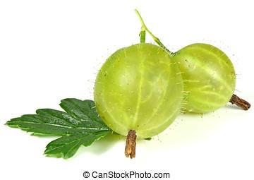 gooseberries - fresh picked gooseberries isolated on white...