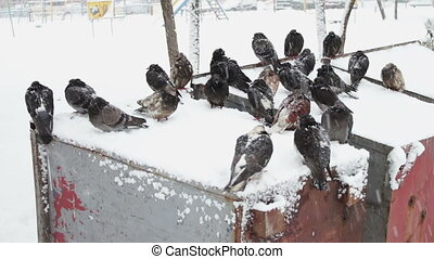 Many frozen pigeons sitting on a snowy trash box