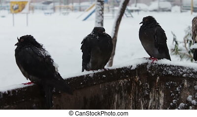Gray frozen pigeons sitting on a snowy trash box