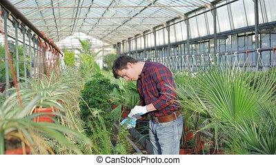 Gardener examining flowerpots in gardenhouse 4K.