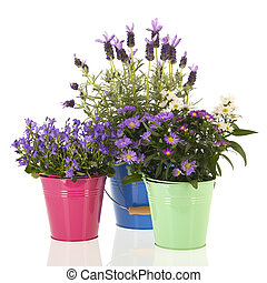Garden flowers in colorful flower pots isolated over white...