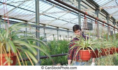 Gardener examining flowerpots in gardenhouse