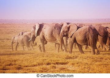 Big family of African elephants in Maasai Mara - Big family...