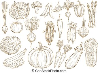 Vegetables vector sketch isolated icons set - Vegetables...