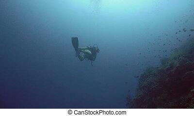 Scuba Diver underwate. - Scuba diver explores underwater...