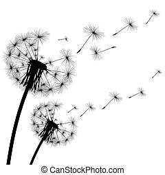 black silhouette of a dandelion on white background - black...