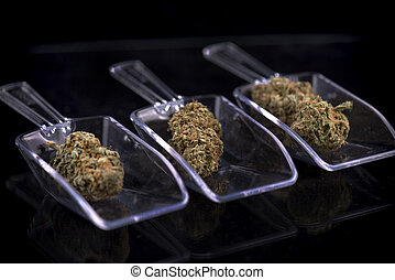 Three cannabis buds isolated over white - marijuana...