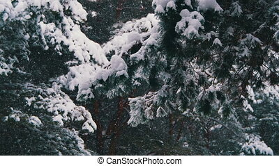 Snow falling in Winter Pine Forest with Snowy Christmas...