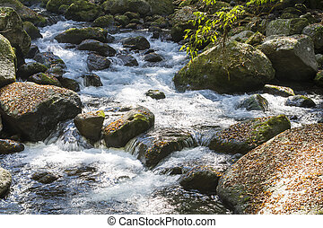 Brook flowing through a surrounded with fallen leaves on...