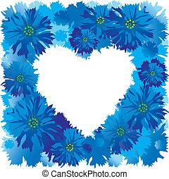 Cornflower - Cornflower ona white background