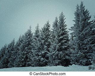 abete, albero