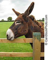 a brown donkey resting on a fence - a brown donkey resting...